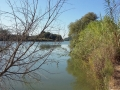14_Il biondo Tevere nella riserva di Nazzano...