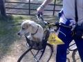Sempre cara bicicletta